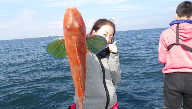 湾奥湾央釣り、ホウボウ、マダイ、タチウオ、イナダ